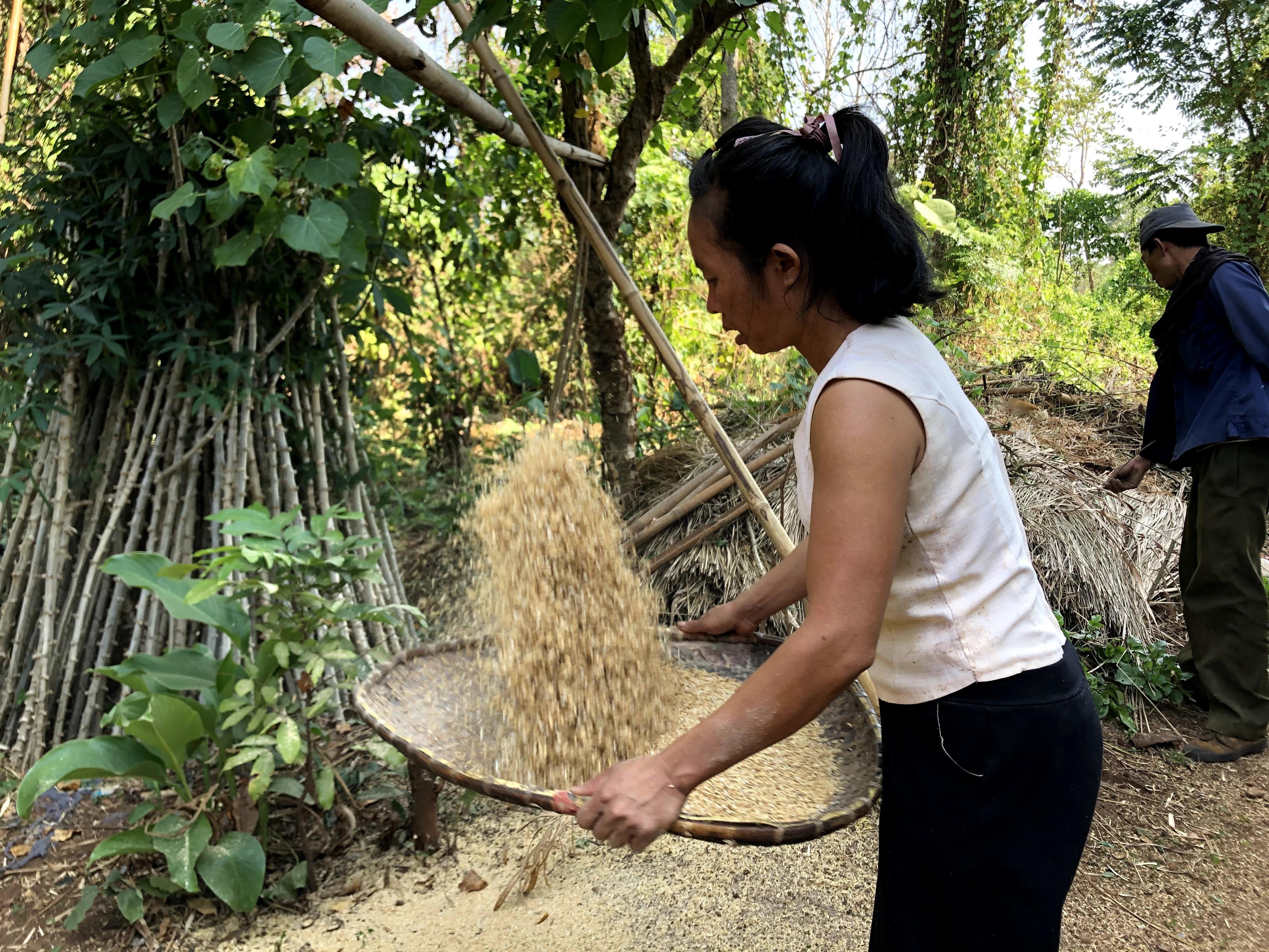 杵つき玄米作り