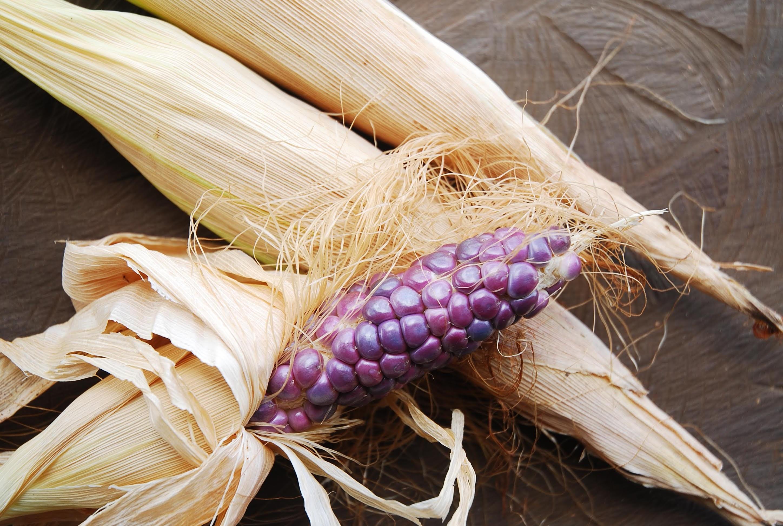 紫色のトウモロコシが実ったら