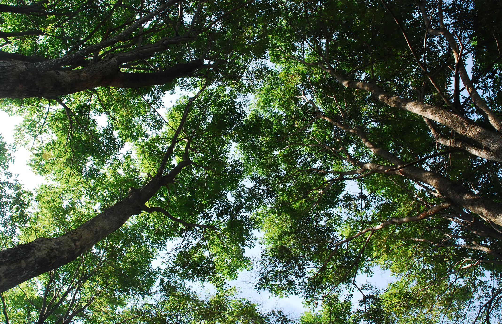 食べれる森の食べれる植物たち