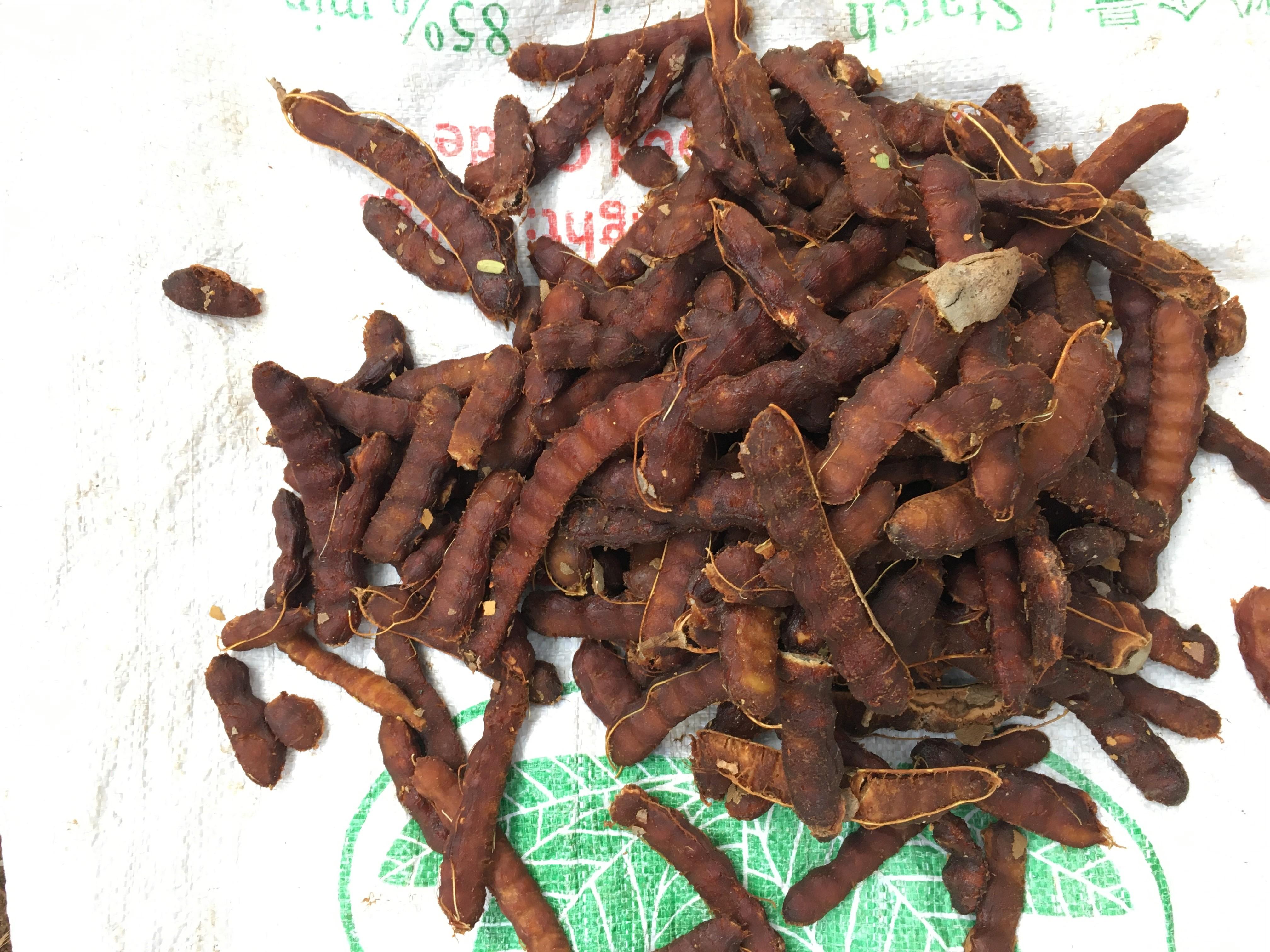 整腸・疲労回復に最適・タマリンド収穫
