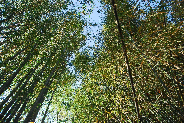 竹の施設作り その1竹をとる