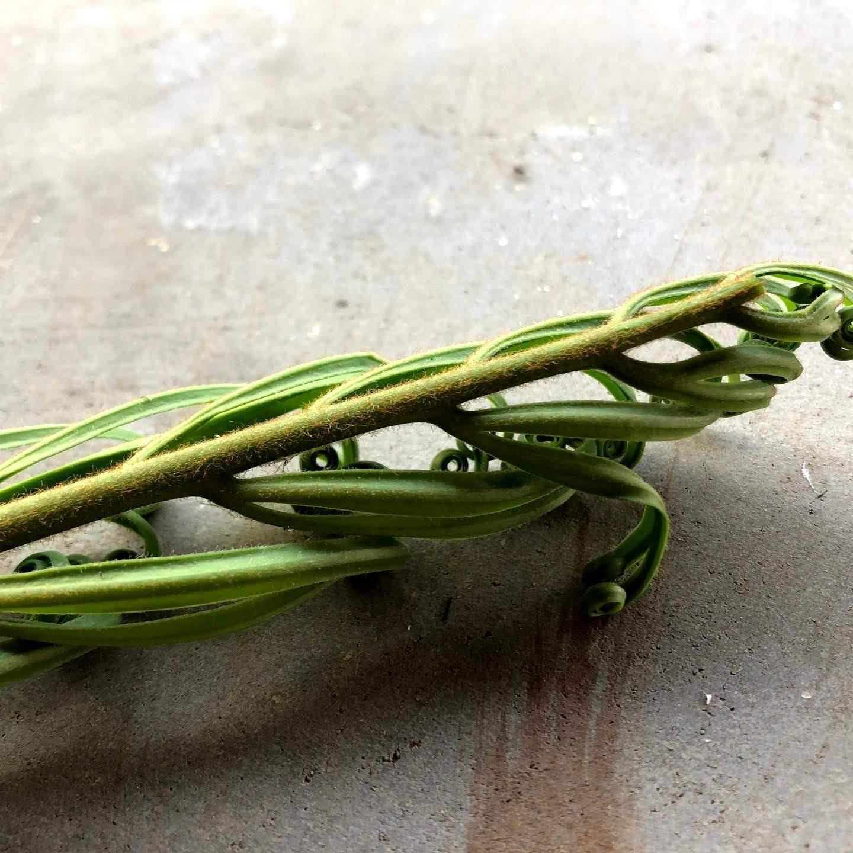 これは美味しい!ラオスの摘草(もはや名前も品種も不明ですが)