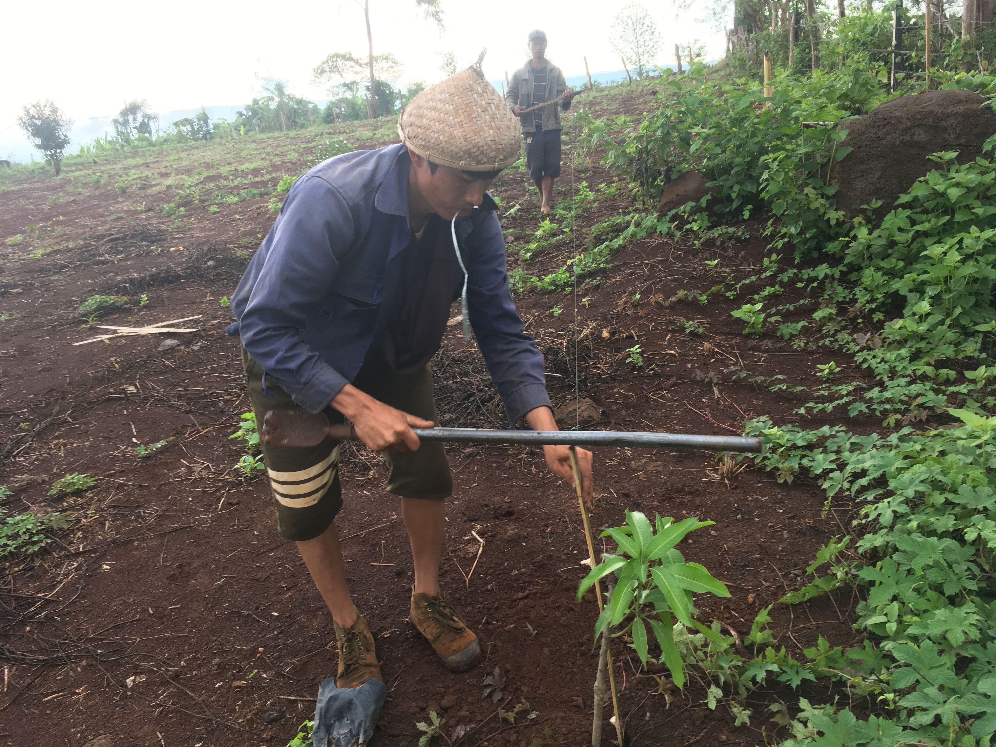 食べれる森作り 植樹開始